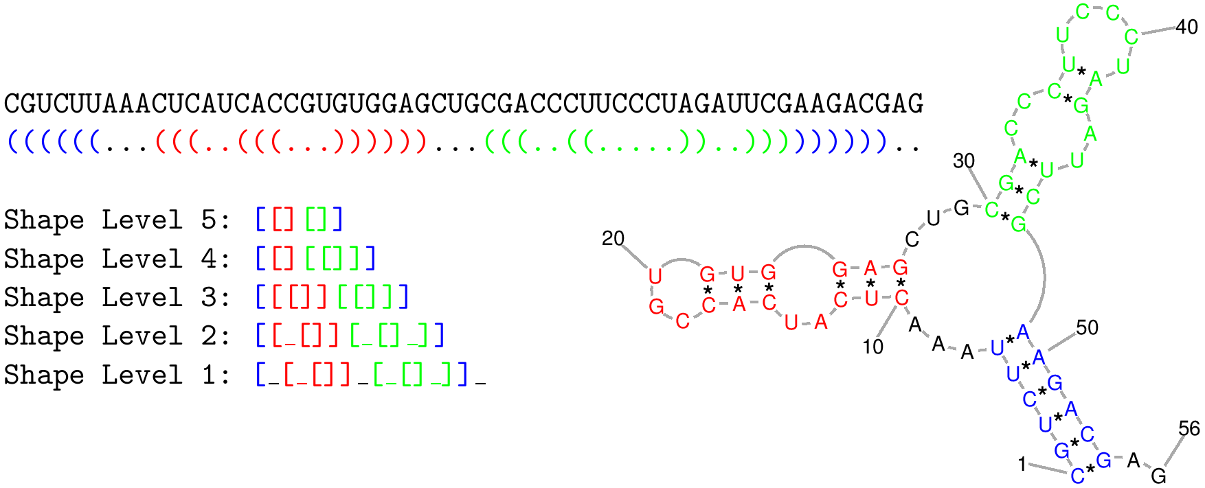 Illustration of one RNA shape and the levels of abstract representation.
